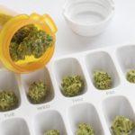 Cannabis – Avvertenze; una guida introduttiva