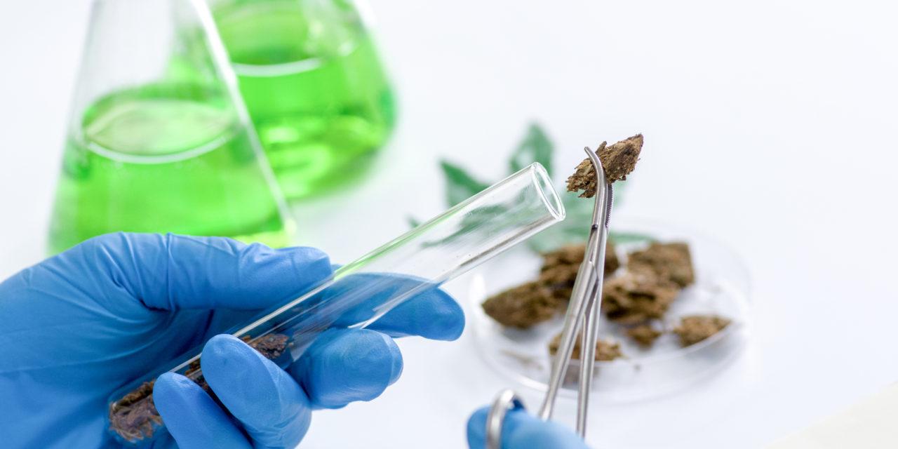 Cannabis terapeutica e andamento della ricerca