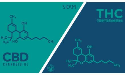 Il rapporto CBD:THC – Terapeuticità ed effetti avversi