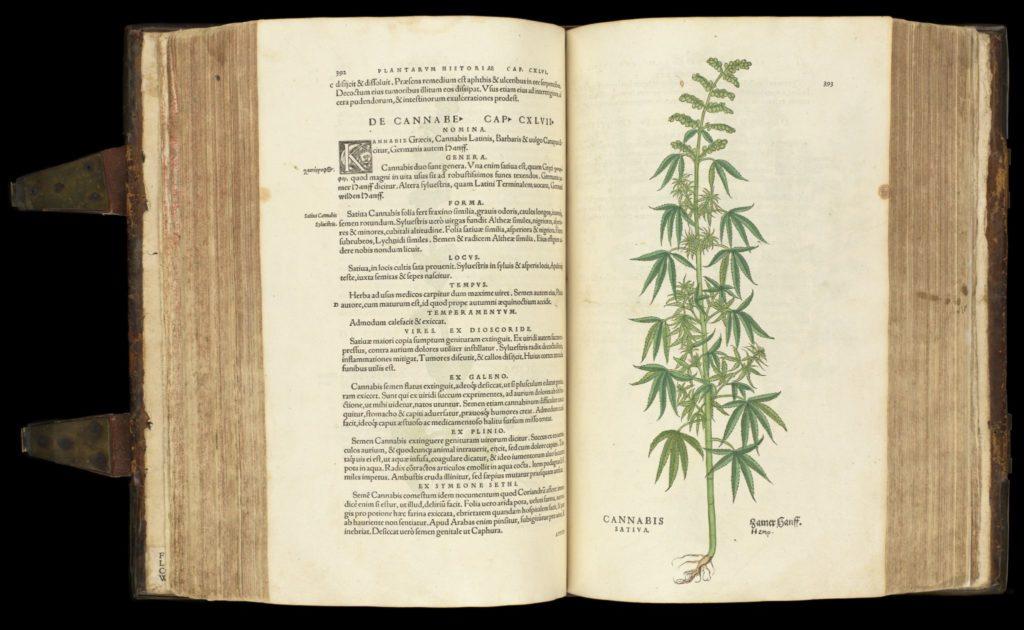 cannabis-historia-stirpium
