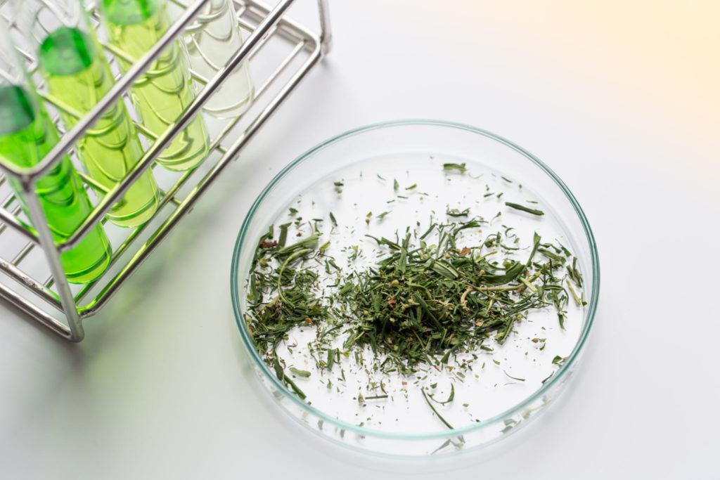 cannabis-analisi-trinciata