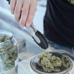 Conservare la cannabis in maniera corretta – studi e regole d'oro