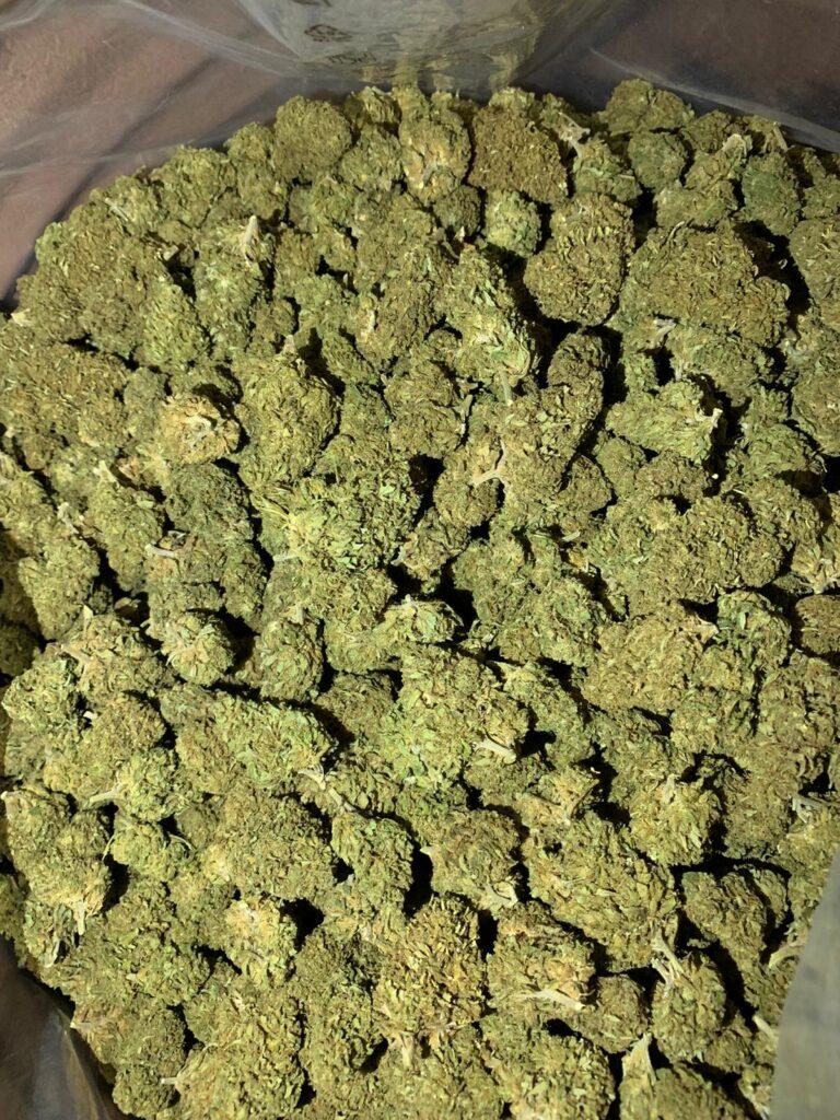 fiori_cannabis_canapa_real cbd